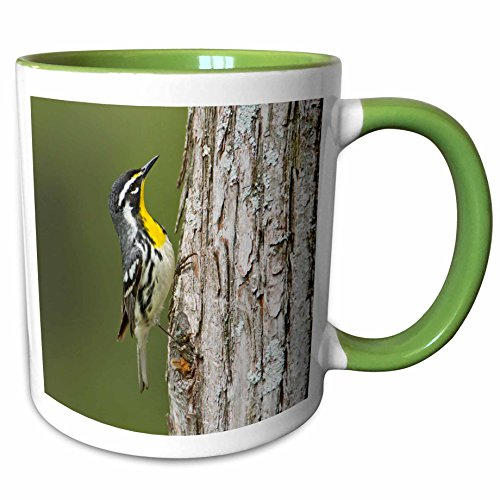 3dRose Danita Delimont - Larry Ditto - Birds - Yellow-throated Warbler hunting insects on cypress tree, Texas, USA - 11oz Two-Tone Green Mug - Texas Cypress Outlet