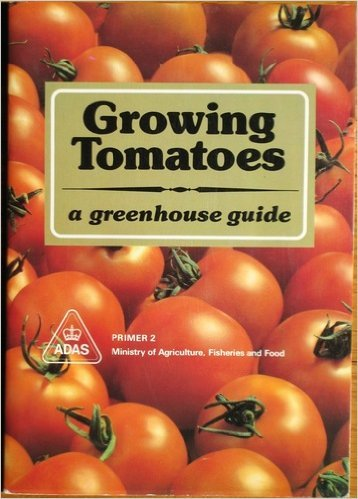 growing tomatoes - 9