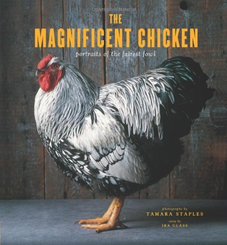 The Magnificent Chicken: Portraits of the Fairest Fowl (City Chickens)