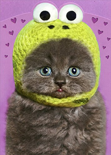Funny Frogs Foil - Kitten Wearing Knit Frog Hat Funny Cat Valentine's Day Card