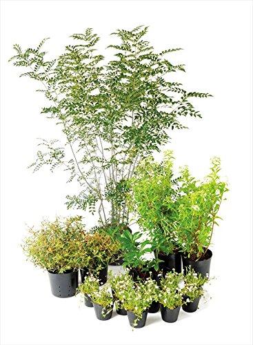 オンリーワン エントランス向け植栽セット ブリーゼ シマトネリコ やさしい景色 UN6-SET08 B01D1LULCQ