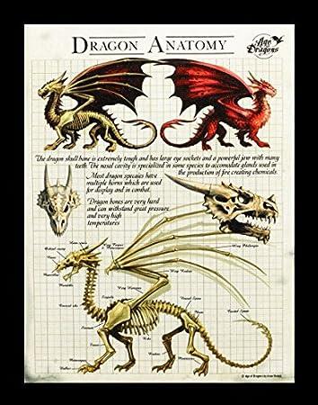 Kleine Leinwand Drachen Anatomie | Dragon Anatomy 25 x 19 cm | Anne ...