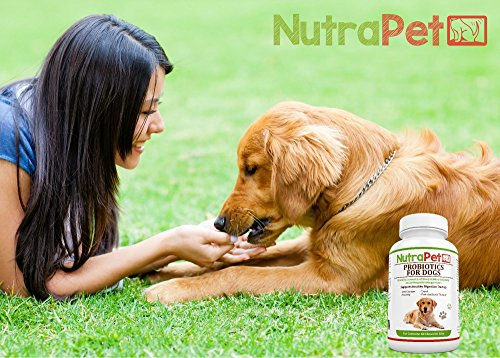 Probiotics for Dogs Chewable most useful Probiotics