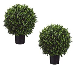 """Set of 2 - Pre-Potted 24"""" High Ball Shaped Boxwood Topiary- 16"""" Diameter - Plastic Pot"""