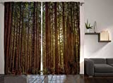 Nature Decor Curtains by Ambesonne, Redwood Forest in California, Window Drapes 2 Panel Set for Living Room Bedroom, 108 W X 90 L Inches, Green and Brown