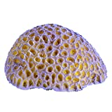 Underwater Treasures 65296 Purple Brain Coral