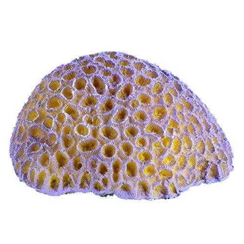 Underwater Treasures 65296 Purple Brain Coral by Underwater Treasures