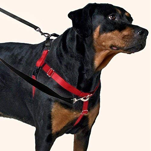 2 Hounds Design Freedom No-Pull Dog Harness Training Package, Medium (1' wide), Black