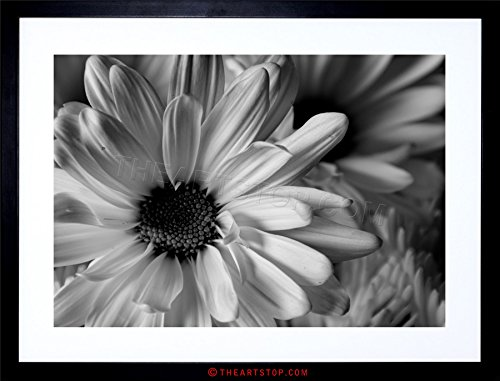 (The Art Stop Photo Black White Flower Petals Framed Print F12X2823)