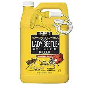 Harris Asian Lady Beetle & Box Elder Killer, Gallon Spray