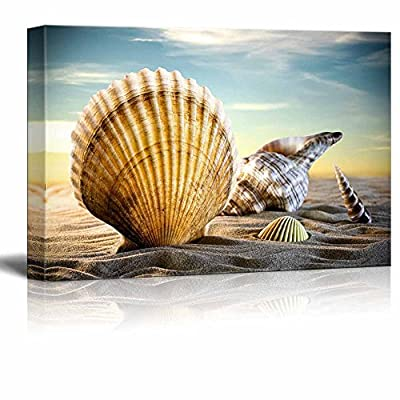 Canvas Prints Wall Art - A Variety of Seashells on a Sandy Beach Under a Clear Sky | Modern Wall Decor/Home Decoration Stretched Gallery Canvas Wrap Giclee Print. Ready to Hang - 24