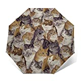 Automatic Tri-fold Umbrella with 8 Ribs Fiberglass Construction, Sun Protection Waterproof Stylish Umbrella for Outdoor Pool Kids Gifts, Lot Of Cute Kitten Domestic Short-Haired Cat