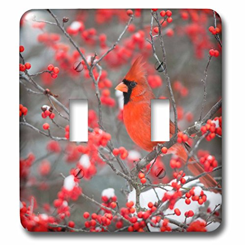 3dRose Danita Delimont - Birds - Northern Cardinal in Winterberry bush, winter, Marion County, Illinois - Light Switch Covers - double toggle switch (lsp_259307_2)