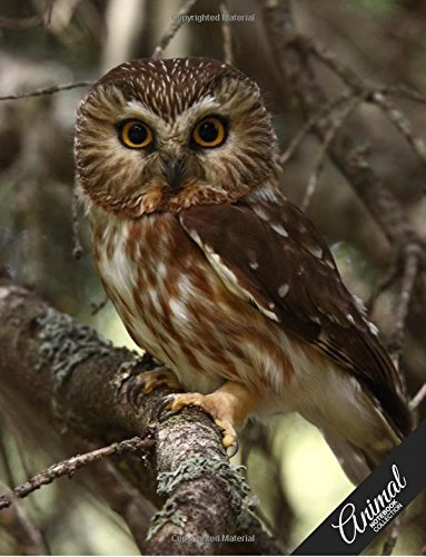 Download Animal Notebook Collection: Owl, Journal/Diary, Wide Ruled, 100 Pages, 8.5 x 11, Composition Book (Volume 16) ebook