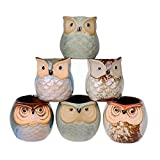 Succulent Plant Pot Owl pot 6 Pieces Mini Ceramic Owl Succulent Plant Pot Flower Glaze Base Serial Set Plant Holder Cactus Planter Pot Flower Pot Container Planter with A Hole