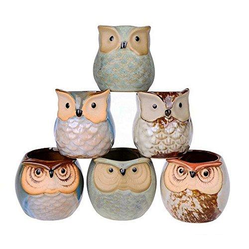 Succulent Plant Pot Owl pot 6 Pieces Mini Ceramic Owl Succulent Plant Pot Flower Glaze Base Serial Set Plant Holder Cactus Planter Pot Flower Pot Container Planter with A Hole by MiMiLive