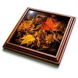 3dRose trv_110777_1 Fall Leaves on Forest Floor Trivet with Ceramic Tile, 8 by 8'', Brown
