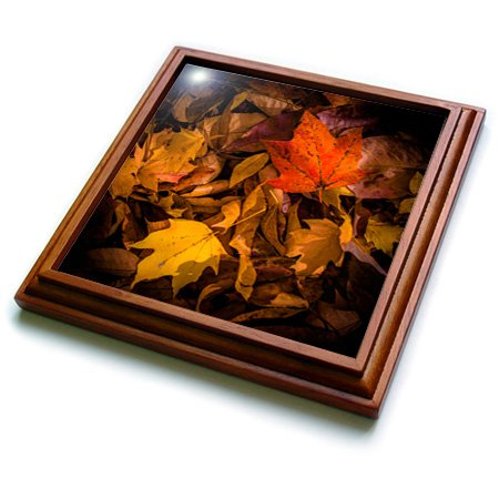 3dRose trv_110777_1 Fall Leaves on Forest Floor Trivet with Ceramic Tile, 8 by 8'', Brown by 3dRose