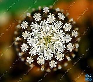 Pinkdose 100PCS 12 tipi Misti Piante Succulente Cactus piante piante Bonsai Case vegetali giardinaggio Vasi di fiori Balcone fiori Best-Sellin: Multi-Colored