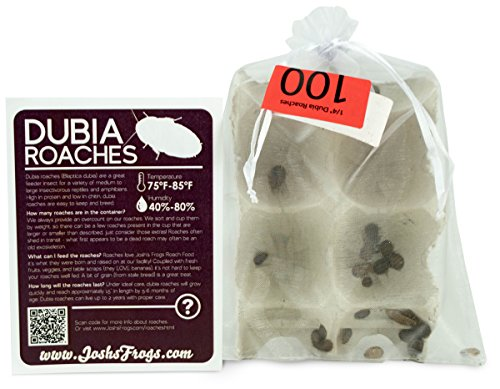 Josh's Frogs 1/4-3/8 Small Dubia Roaches (100 Count) -