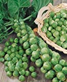 Seedscare Brussels Sprouts Long Island Edible Seeds (Pack of 50 seeds)