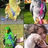 Bird Harness, Leash Bird, Harness and Parrot