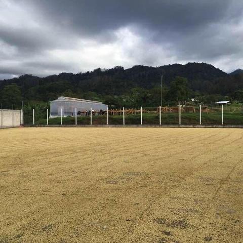 5 LBS Honduras Copan Organic Unroasted Green Coffee Beans