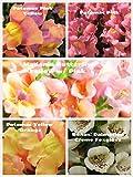 Bulk 4 Snapdragon Seeds Survival Seeds 750 Seeds Upc 600188190229 & Bonus Foxglove Pack AB