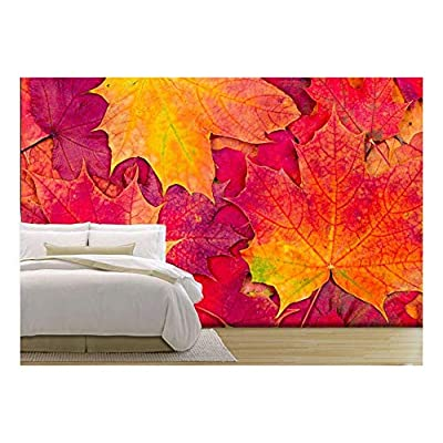 Pretty Craft, Background from Bright Autumn Leaves of a Maple, Top Quality Design