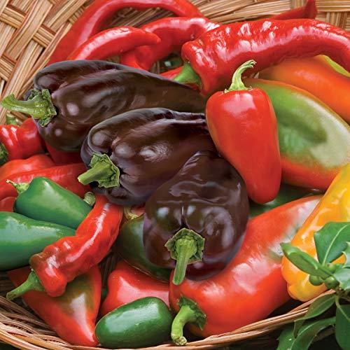 Burpee Hot Salsa Blend Hot Pepper Seeds 200 ()