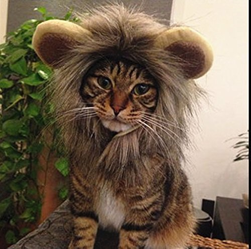 Cat Lion Costumes (Sporer@ Pet Costumes Lion Mane Wig Cat Costume and Small cat and dog Costume with Complimentary Feathered Catnip Toy Headwear Hat with Ears for Halloween&Christmas(Gray (F)))