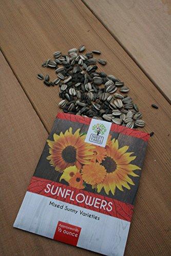 maximilian sunflower seeds - 9