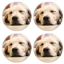 Liili Round Coasters A young beautiful white labrador retriever sleeping looking very cute soft cuddly Photo 20538867 by Liili Customized Premium Deluxe generation Accessories HD