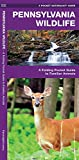 Pennsylvania Wildlife: A Folding Pocket Guide to Familiar Animals (Wildlife and Nature Identification)