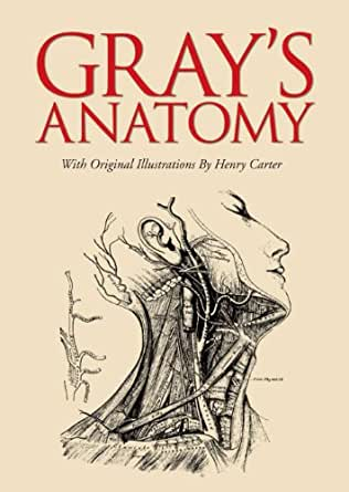 grey's anatomy free download