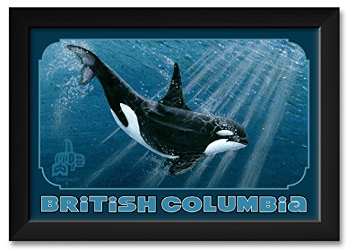(Northwest Art Mall Single Orca British Columbia Canada Framed Art Print by Dave Bartholet. Print Size: 12