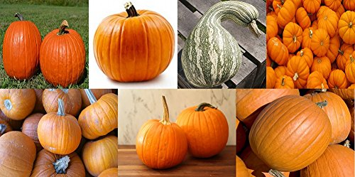 7 Pumpkin Variety Seed Pack by Pure Pollination