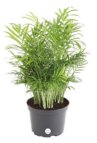 Low Light Dish Garden Plants