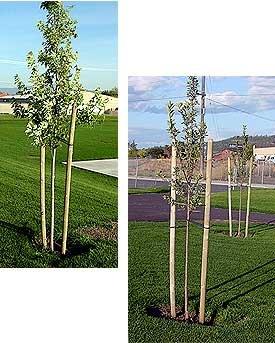 Century Universal Tree Ties 10 pk product image