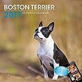 LittleGifts Boston Terrier 2017 Calendar (3026)