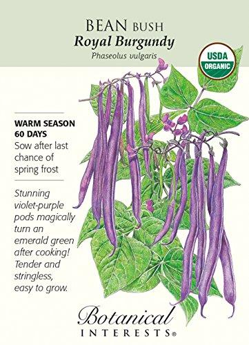 Botanical Interests, Seed Bean Bush Royal Burgundy Organic