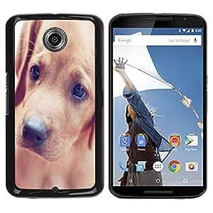 PC/Aluminum Funda Carcasa protectora para Motorola NEXUS 6 / X / Moto X Pro Golden Retriever Puppy Dog Canine / JUSTGO PHONE PROTECTOR