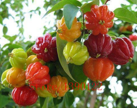 Brand New! 20pcs Surinam Cherry seeds, Pitanga fruit seeds,Brazilian Cherry{red} ,rare plant for home & garden ()