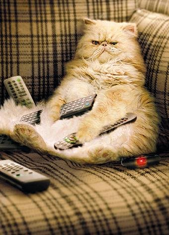 Image result for cat with tv remote