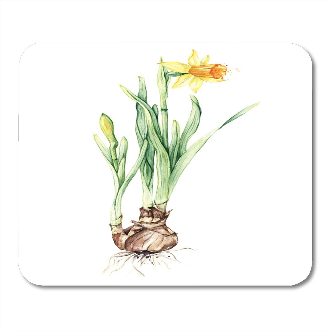 Amazon Com Boszina Mouse Pads Gardening Green Bulb Daffodil Spring