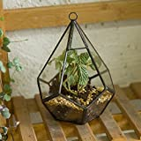 Modern Artistic Tears Shape Diamond 3MM Thick Clear Glass Geometric Polyhedron Terrarium Hanging Air Planter(Plants not included) 4.5x4.5x5.3 inches (5.5 inches with loop)