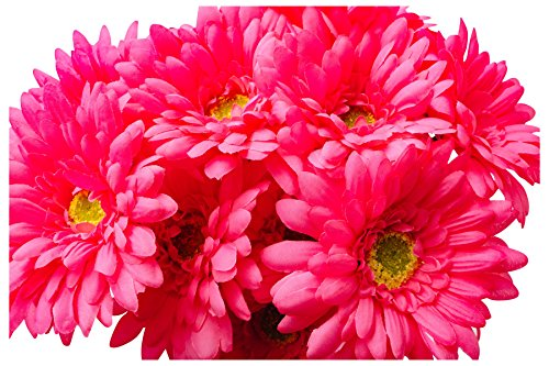 (CraftMore 14 Inch Pink Gerbera Daisy Stems Set of)