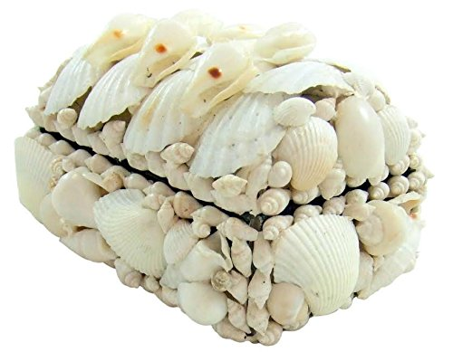 Westin Works Gifts Real Natural White Sea Shell Jewelry Trinket Box Nautical Home Decoration Gift 6 Inches Long