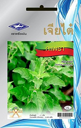 Holy Basil Seeds - 1 Package From Chia Tai, Thailand (Pot Plant Basil Holy With)