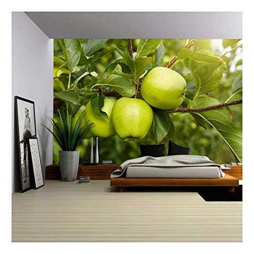 wall26 - Green Apples in The Orchard - Removable Wall Mural | Self-Adhesive Large Wallpaper - 66x96 ()